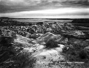 Petrified Forest_BlueMesaView_4x5_TMax_neg_bw_DM1_NatwebC.jpg
