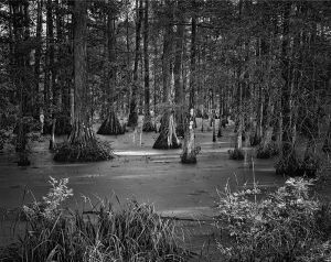 Lake Martin Rookery Road close to boardwalk_bw_d_DMa.jpg