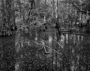 Big_Thicket_Kirby_Trail_Swamp_1_bw_d_1NNN_DMa.jpg
