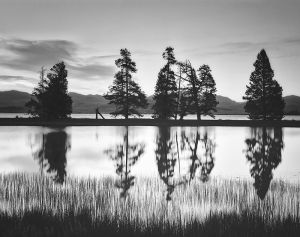 Yellowstone_Gull Point Trees B_bw_DMa.jpg